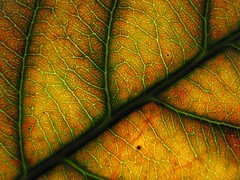 Glowing Leaf *WINNER* | by Renee Silverman