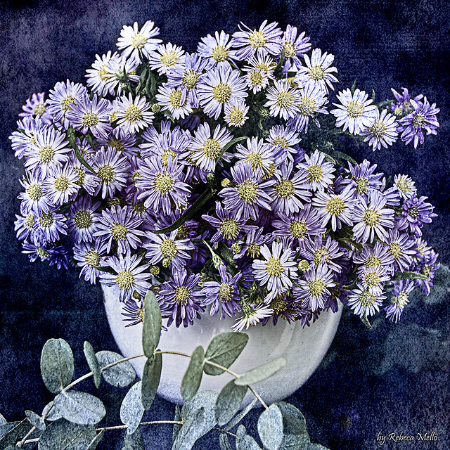 Some small  lilac  daisies..