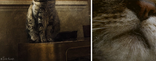 The essence of cat - diptych | by moggierocket