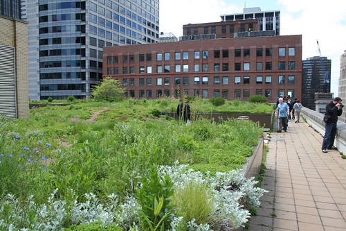 City Hall's green roof | by repowers