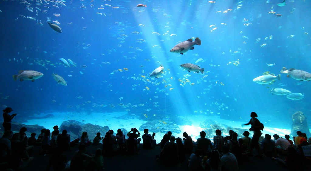 Image result for aquarium flickr