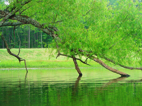 lake reflection tree green nature water leaves yellow landscape outdoors branches willow arkansas hotsprings ouchita ibeauty ouchitalakestatepark
