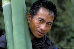 Portrait of man carrying bamboo. Indonesia | by World Bank Photo Collection