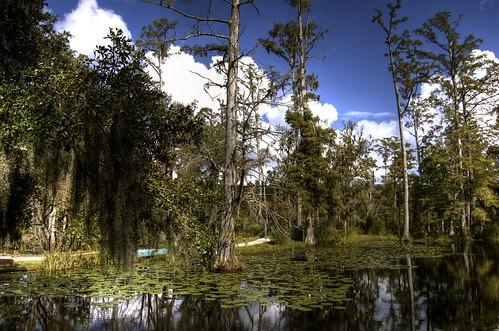 trees water nikon swamp cypressgardens hdr d40