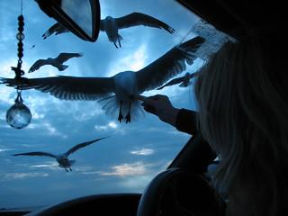 Gulls | by Lindsay Evans