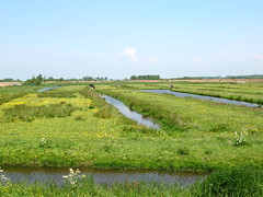 Fields and Canals in Zaanse Schans, Holland