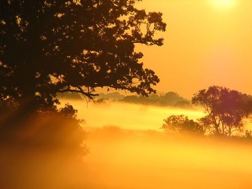 morning trees orange sun fog sunrise fields mywinners abigfave anawesomeshot colorphotoaward aplusphoto wowiekazowie diamondclassphotographer excapture
