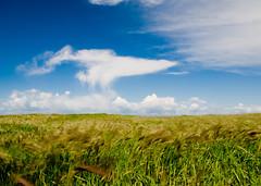 Fields of Green, Skies of Blue   by kaiyen