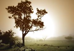 Foggy sunrise | by Vince Alongi