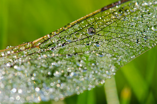 Dragonfly Wing | by George Vnoucek