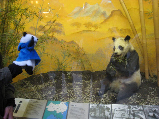Prof Steve Steve meets Chi Chi at the Natural History Museum in London