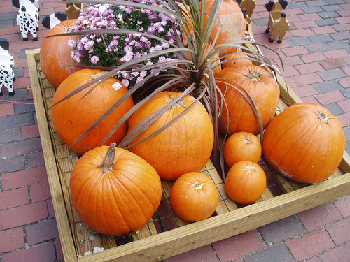 Pumpkins - Fall - Boston, MA | by Smart Destinations