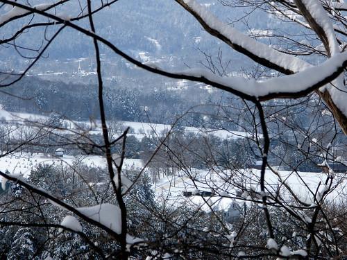 trees winter snow vermont snowcapped valley vt randolphcenter canong9