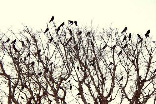 a murder of crows.. | by pomegranates