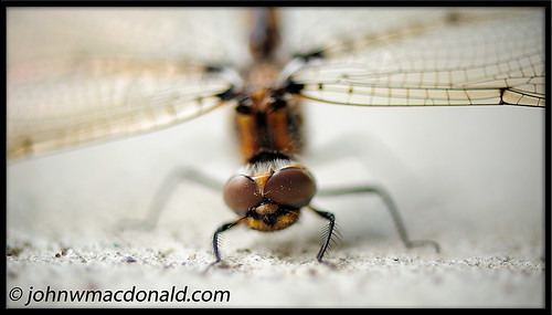 Dragonfly | by johnwmacdonald