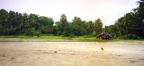 crow on a beach | by abcdz2000