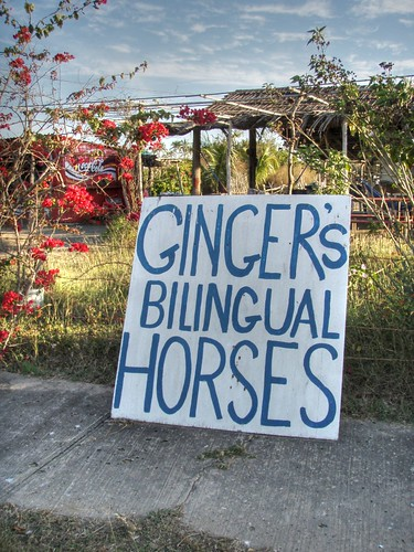 Bilingual Horses | by Rob Lee