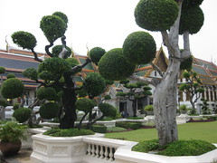 Bonsai trees at the Grand Palace