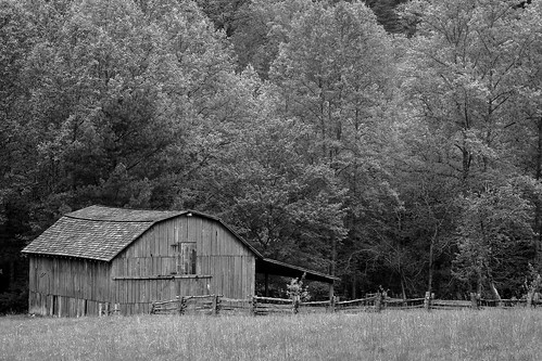 old trees blackandwhite field barn fence nc farm northcarolina weathered wilkescounty stonemountainstatepark davidhopkinsphotography