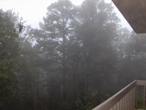 trees vacation fog woods ar arkansas ozarks timeshare fairfieldbay cliffside21
