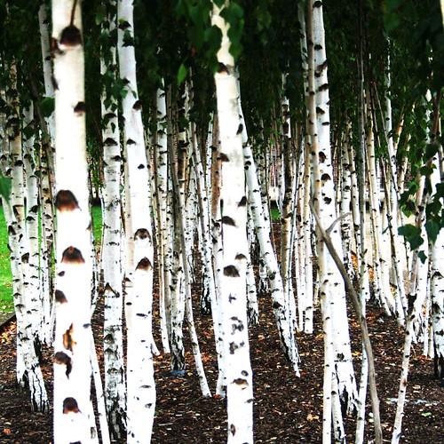 mini forest | by Linda Cronin