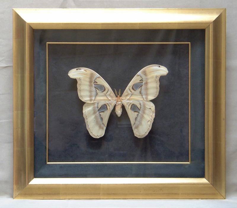 Rare Moth