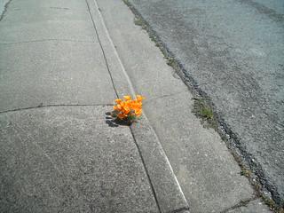 Flowers on the sidewalk | by Aririn