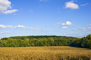 Maryland Fall 2007 10 06 | by morganglines