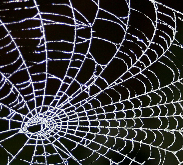 Frosty Morning Web