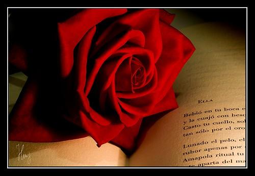 Poema   by Héctor M