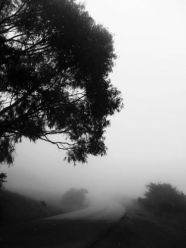 morning trees blackandwhite bw white mist black silhouette fog foggy bayarea onthewaytowork drivebyshooting bwdreams intooblivion reallyfoggy ysplix idisappear top20grey onlyhad5minutestogetsomequickshots cantresistfog sucksmein