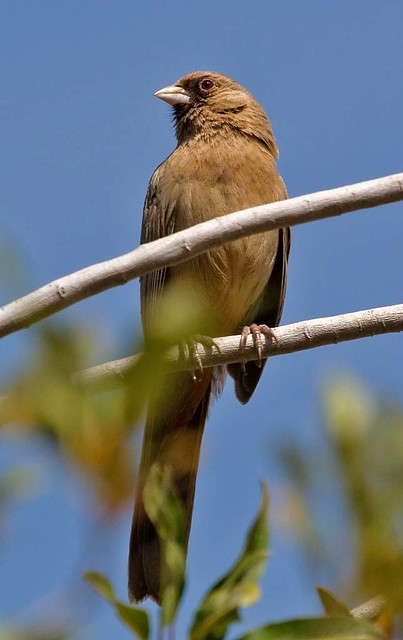 The Birds of Phoenix
