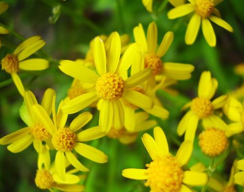 wallpaper portrait flower macro nature yellow amazing pot stunning namesofflowers