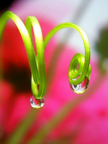 spirals & waterdrops