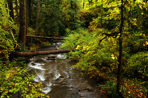 autumn water oregon fallcolors autumncolors pacificnorthwest creeks linncounty mcdowellcreek mcdowellcreekcountypark