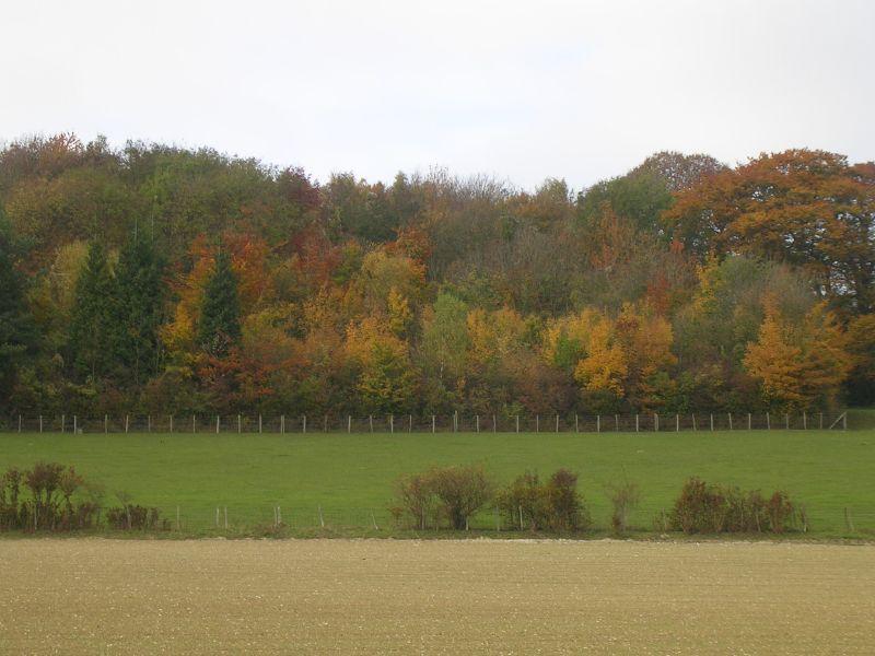 Autumn colour Cuxton to Sole Street
