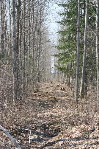 Gap in Hardwood Bush | by BevKnits
