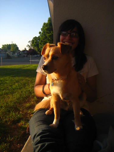 california family sunset chuck lopez porterville chihuahuaterrier katielopez