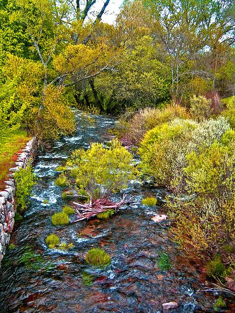 El rio de la vida........