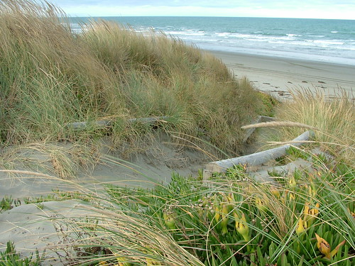 2008-02-13-Christchurch 075