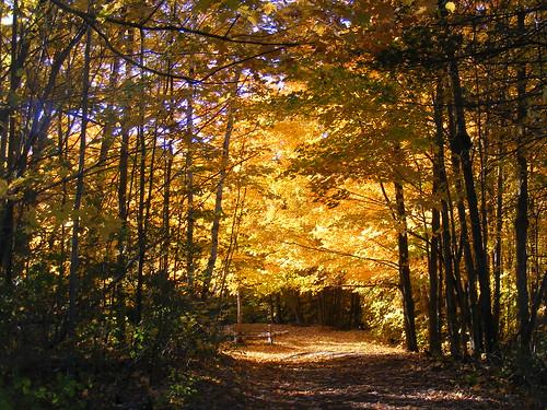 morning autumn trees plants leaves yellow october sunday maine botany plantlife lewiston wildlifepreserve thorncragbirdsanctuary