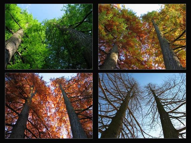 Four seasons / Négy évszak
