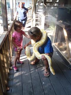 Mojo the albino python   by keywest aquarium