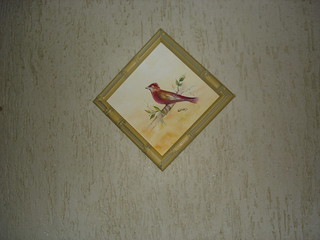 Pássaro 1