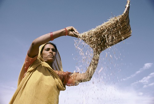 Sifting grain | by World Bank Photo Collection