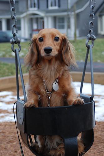 Archie swinging