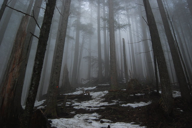 Foggy Mailbox