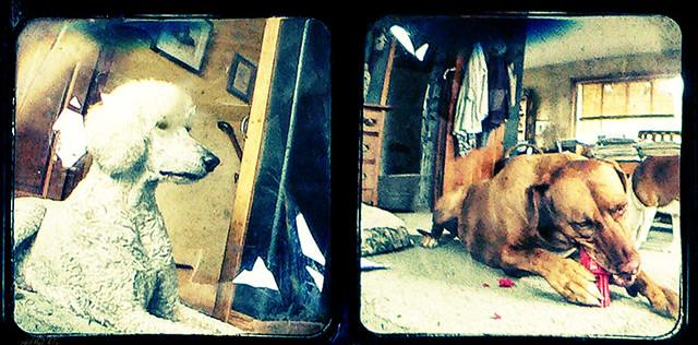 TTV Kodak Duaflex II - dogs life