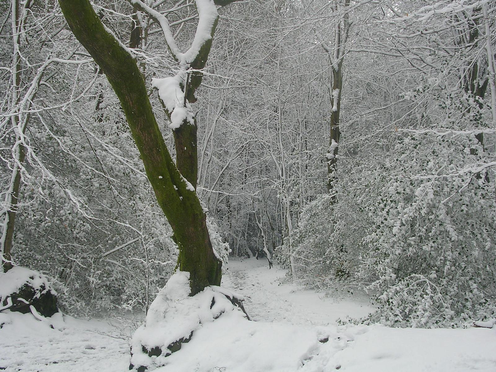 Inviting path Haslemere Circular (silent walk)