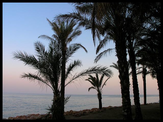 Torremolinos - Playa de la Carihuela - palms in the sunset